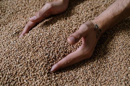Hands in Grains